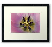 THE INSIDE A BUMBLE BEES VIEW Framed Print