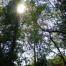 Sun Dance in the Treetops by Songwriter