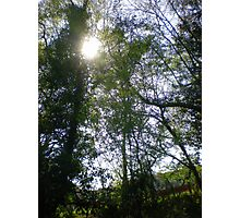 Sun Dance in the Treetops Photographic Print