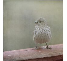 A Little Birdy Told Me Photographic Print