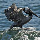 Surfing Bird by Steve Hunter