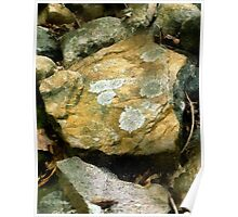 The Lichen-Spattered Stone Poster
