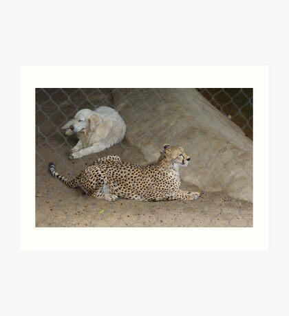 Cheetah and Dog Art Print