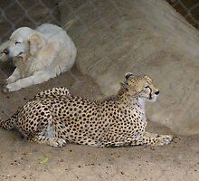 Cheetah and Dog by Karen Checca