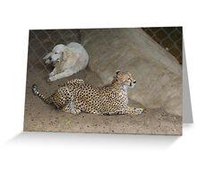 Cheetah and Dog Greeting Card