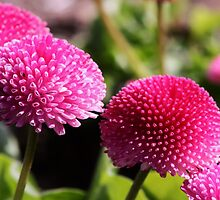 4 little flowers sitting in a row by xxnatbxx