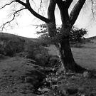 Tree by a stream by marting04