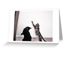 Cat Boogie Greeting Card