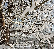 Tree covered in snow by StefanFierros