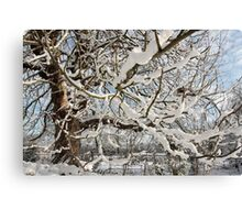 Tree covered in snow Canvas Print