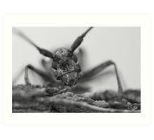 Insect Close Up Art Print