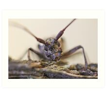 Color - Insect Close Up Art Print