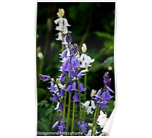 Bluebells & White Bells Poster