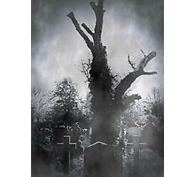 The Dead Tree Photographic Print