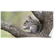 NEW YORK SQUIRREL | 2:1 Poster
