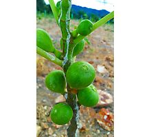 Fig Fruits Photographic Print