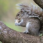 NEW YORK SQUIRREL by mc27