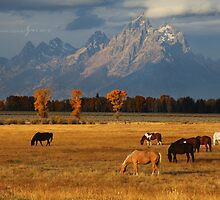 Grand Pastures by Nate Zeman