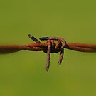 Barbed Wire..................... by Larry Llewellyn