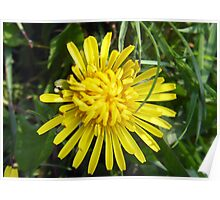 Happiness is in a Dandelion... Poster