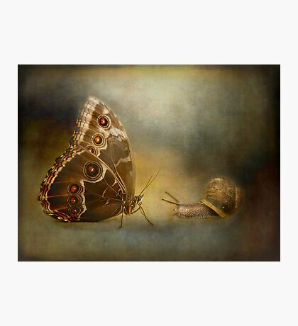 Brian asked the butterfly...... Photographic Print