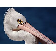 Pelican, Head Shot Photographic Print