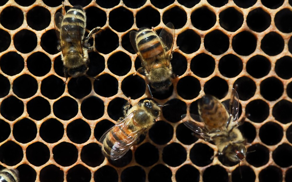 Honey Bees on Honeycomb by Zunazet