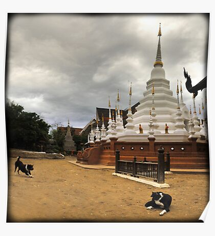 Temple mutts, Chiang Mai, Thailand Poster