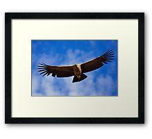 Andean Condor, Colca Canyon, Peru Framed Print