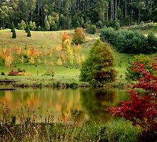 Autumn in Tasmania by myraj