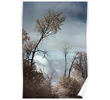 Trees in Infrared Poster