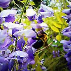 Wisteria and Bee by Susan S. Kline