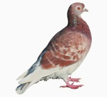 Red Pigeon (Isolated) by Artberry