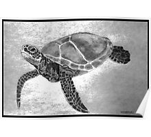 Sea Turtles are endangered species Poster