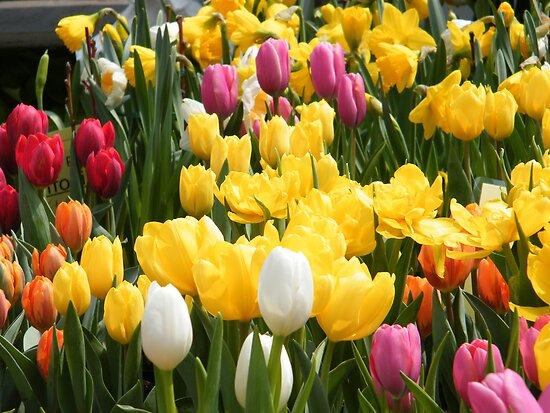 Spring Flowers, New York City by lenspiro