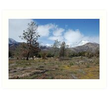 wildflowers in kernville Art Print
