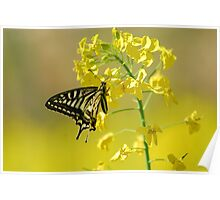 swallowtail and yellow Poster