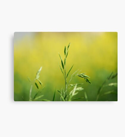 colour and light Canvas Print