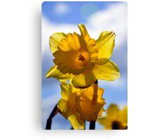Daffodils in the Sun Canvas Print