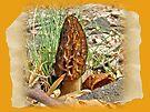 Morel Mushroom - Hardwood Forest Green Lane PA by MotherNature