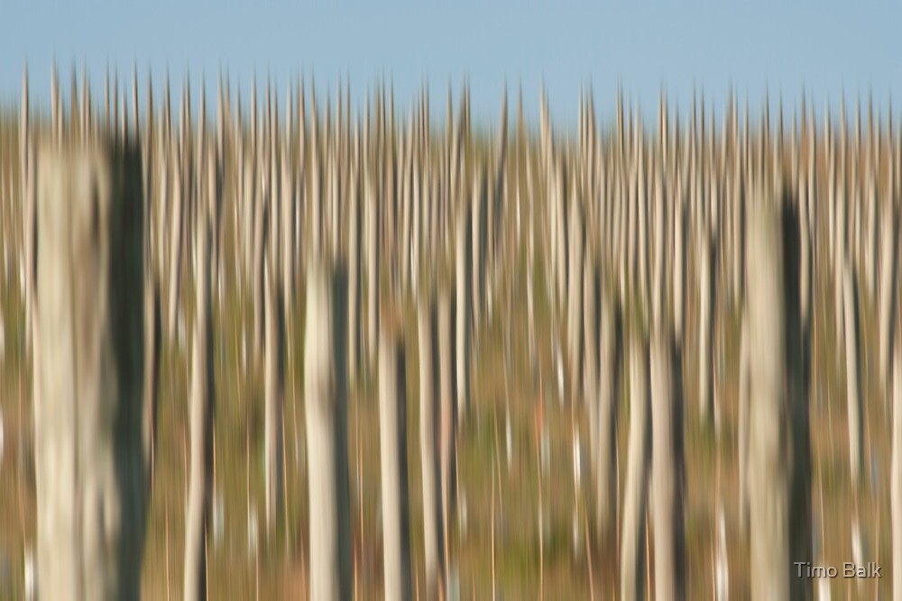 Winery Poles by Timo Balk