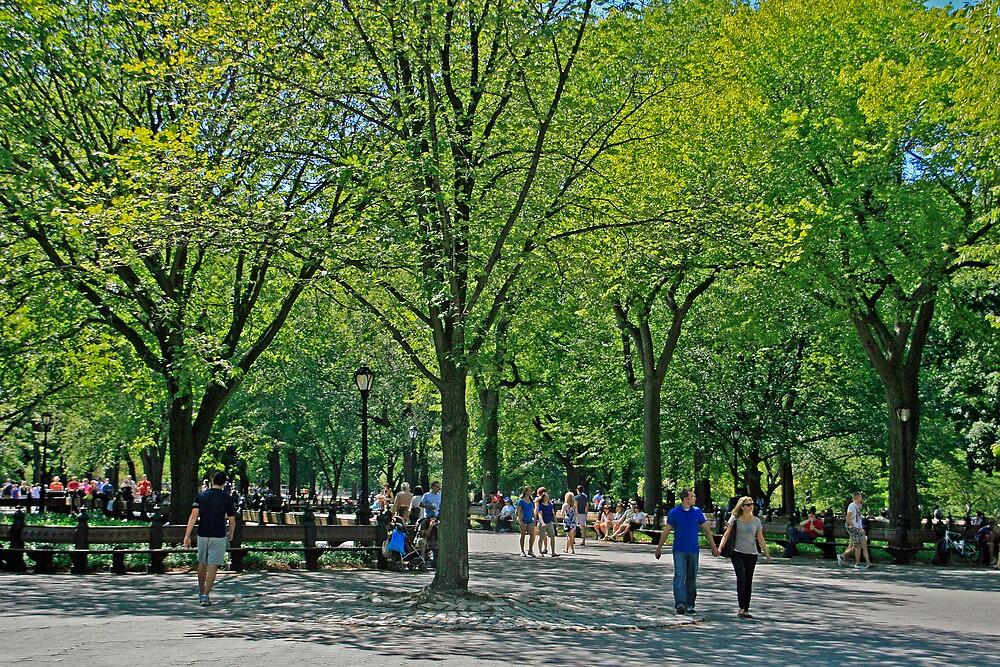 A Walk In Central Park by GW-FotoWerx