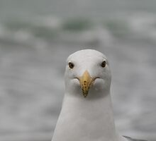 Portrait of a Seagull by Maurine Huang