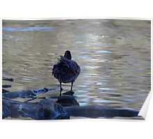 Shimmery scene - duck in the pond Poster