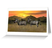 Sunset Zebras Greeting Card