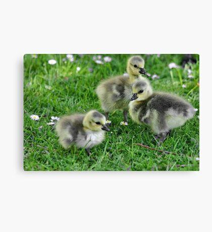 Spring Babies Canvas Print
