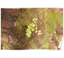 Little leaf Poster