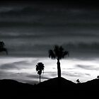 California Sunset Palm by Cleber Photography Design