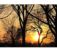 Sunset Trees  Photographic Print