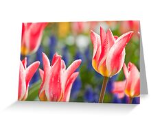 Candy Apple Tulips Greeting Card
